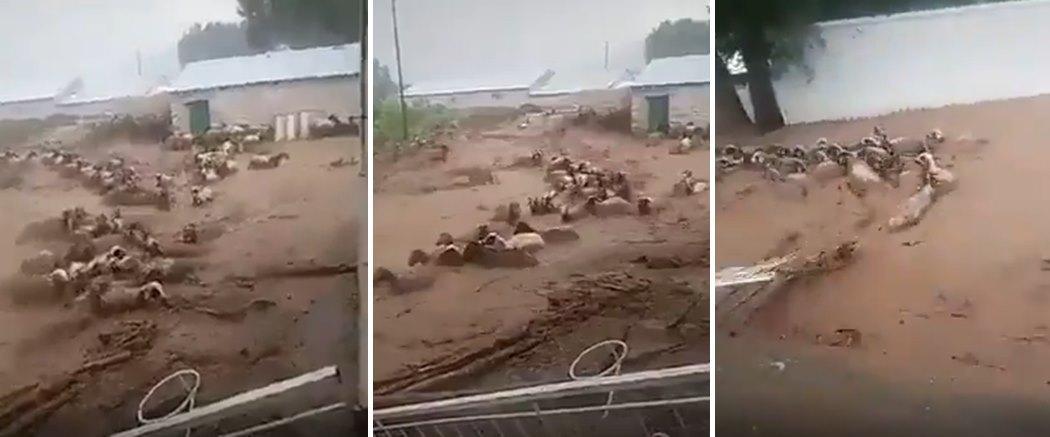 Van Başkale'de Etkili Olan Selde Sürüklenen Koyunların Korkutucu Görüntüleri
