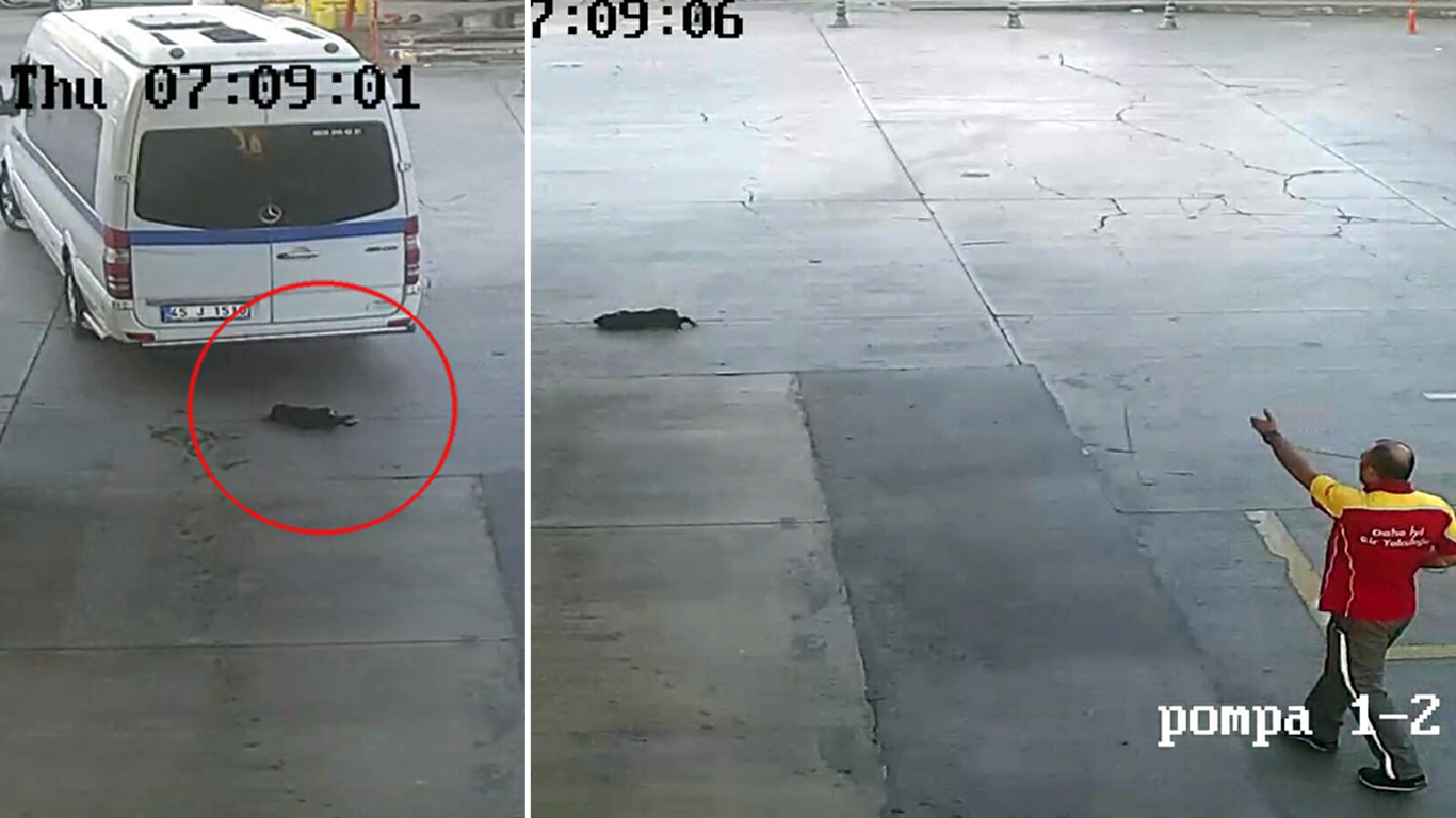 Yavru Köpeği Göz Göre Göre Ezen Sürücü: 'Onun Geçmesini mi Bekleyecektim?'