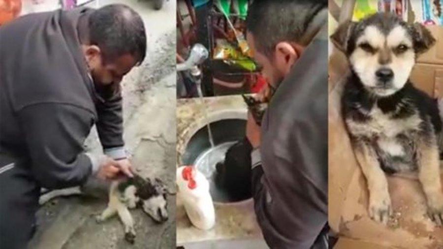 Yemek Yediği Sırada Fenalaşan Köpeği Suin Teneffüs Yaparak Hayata Döndüren Güzel İnsan