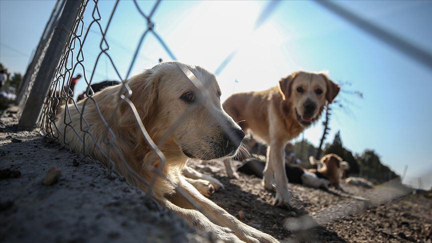 Yeni Bir Dönem Başlıyor: Hayvanlar İçin Yıllardır Beklenen Kanun Teklifi TBMM'de Kabul Edildi!