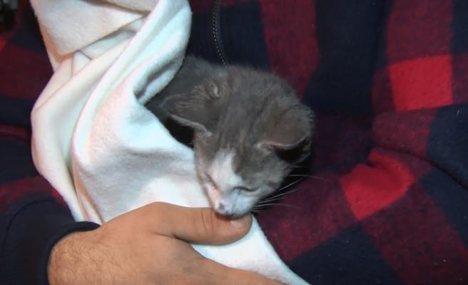 2 Kız Kardeş, Evde Çıkan Yangından Kedileri Sayesinde Kurtuldu
