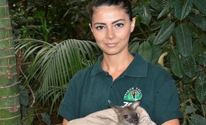 Yavru kanguruya ana şefkati!