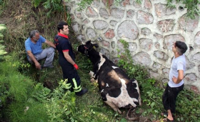 Dereye düşen inek itfaiyeyi seferber etti