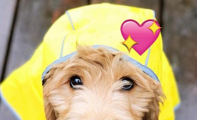 Şu Anda Bir Köpek Sahiplenmenizi Sağlayacak Aşırı Sempatik Olan 7 Köpek