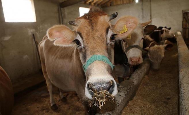 Tarım Bakanı Pakdemirli Hedefini Açıkladı: '2022 Yılında Hayvan İhraç Eden Ülke Olacağız'