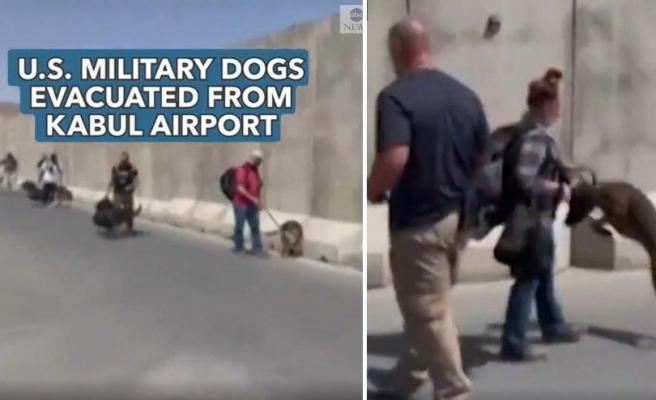ABD Askeri Köpeklerinin Afganistan'dan Tahliye Edilmesi Eleştirilere Neden Oldu: İnsanlardan Daha Değerliler