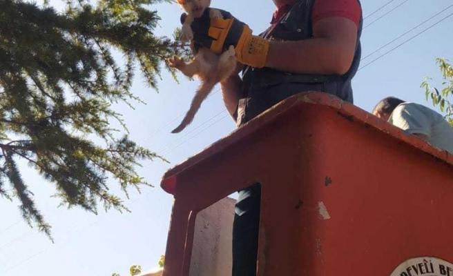 Ağaçta mahsur kalan kedi yavrusunu itfaiye ekipleri kurtardı