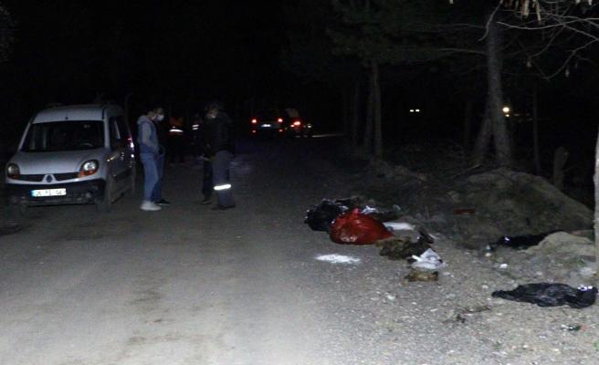 Ankara'da Patilerine Damar Yolu Açılmış Onlarca Ölü Köpek Bulundu