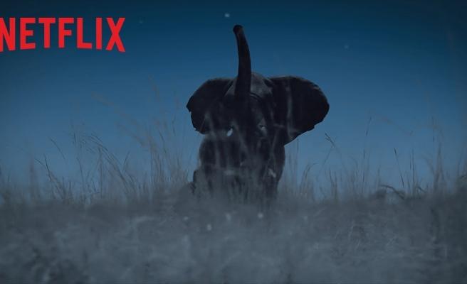Anlatıcılığını Beren Saat'in Üstlendiği Netflix'in 'Dünya'da Gece' Belgeselinden Fragman Geldi!