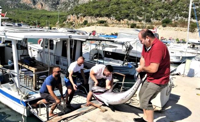 Antalyalı balıkçıların dev orkinos ile 4 saat süren mücadelesi