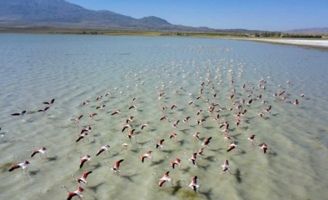 Arin Gölü'nü renklendiren Flamingolar havadan görüntülendi