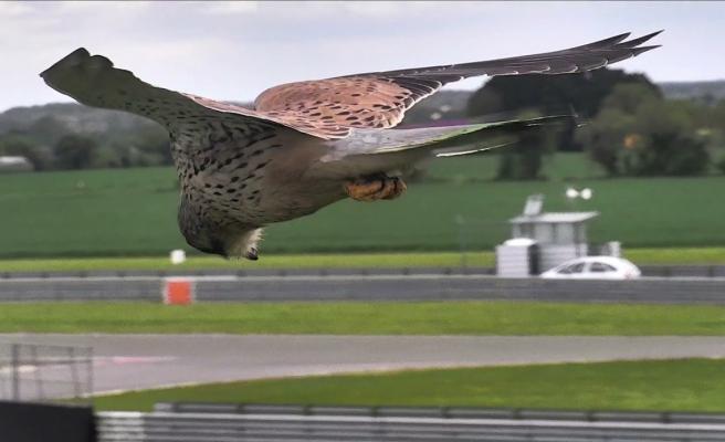 Avını Ararken Rüzgara Karşı Başını Mükemmel Bir Şekilde Sabitleyen Kerkenez Kuşu