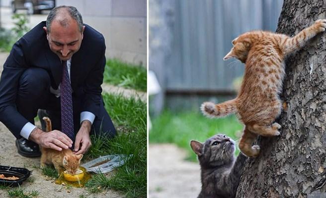 Bakan Gül'den 'Hayvan Hakları Yasası' Mesajı: 'Geri Sayım Başladı'