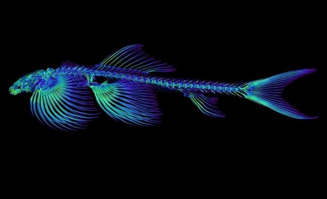 Balıklar, karada yürüyebilir mi?