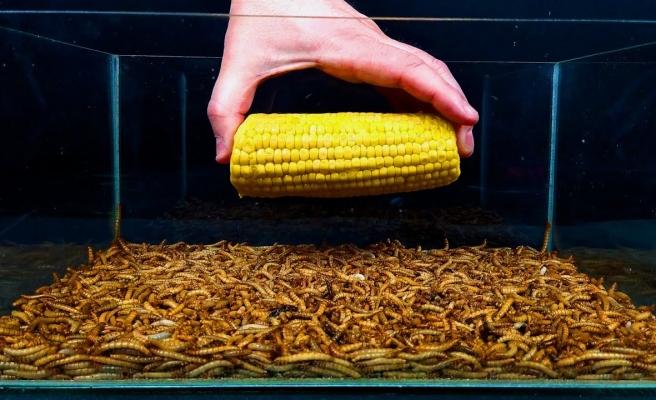 Binlerce Solucanın Meyve ve Sebzeleri Silip Süpürdükleri Anların Time Lapse Görüntüleri