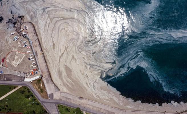 Bir Denizi Öldürdük: Müsilaj Hakkında Hangi Adımlar Atılıyor, Uzmanlar Ne Diyor?