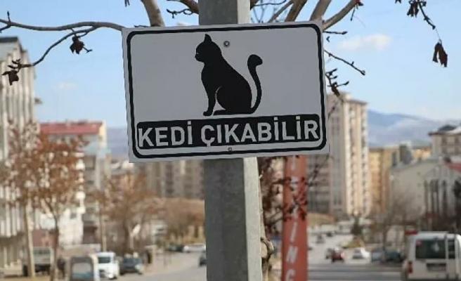 Bir Öğrenci Önerdi: Sivas Belediyesi'nden Şehre 'Kedi Çıkabilir' Uyarıları