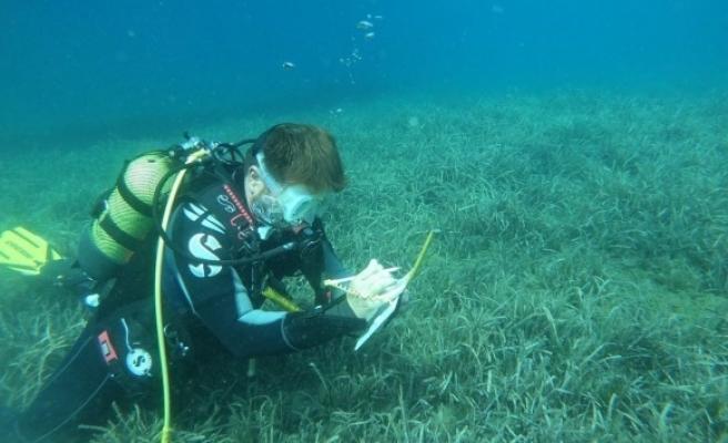 BM desteğiyle deniz çayırları için mücadele ediyorlar