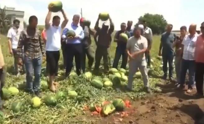 Çiftçiler, 'Cumhurbaşkanım Lütfen Gör' Diyerek İsyan Edip Karpuzları Parçaladılar