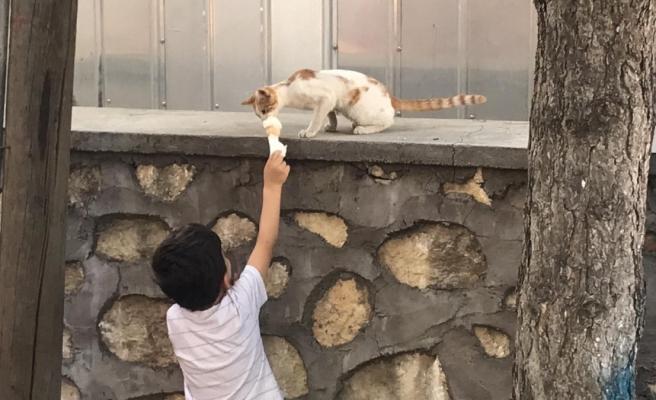 Dondurmasını Sokak Kedisi ile Paylaşan Ufaklığın Muhteşem Anları
