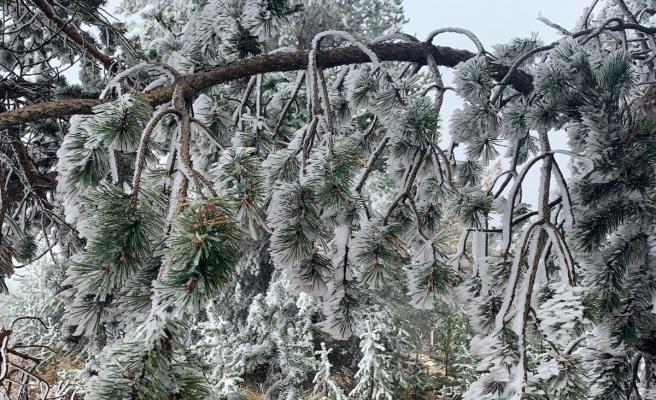 Dünyada sadece iki bölgede olan kristal kar ağaçları beyaza bürüdü