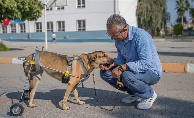Engelli Hayvanlar İçin Protez Yürüteç Yapan Mehmet Öğretmen ile Tanışın!