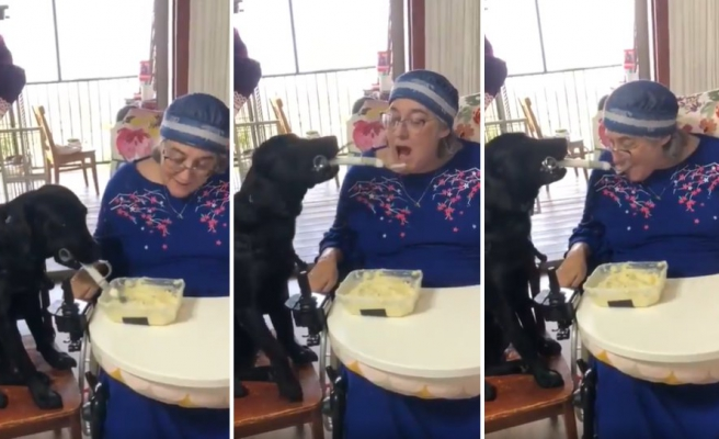 Engelli İnsan Dostuna Kaşıkla Yemek Yediren Köpek