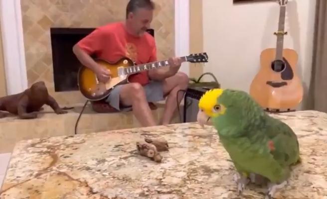 Gitar Çalan İnsan Dostuna Eşlik Eden Kuşu İzlerken Gününüz Güzelleşecek