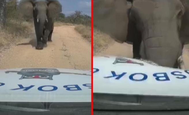 Güney Afrika'da vahşi fil arabayı böyle parçaladı
