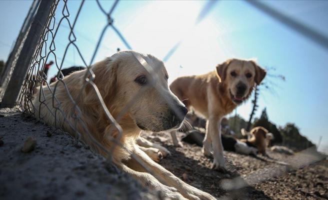 Hayvanları Koruma Kanun Teklifi TBMM'ye Geliyor: Hayvanlara Karşı İşlenen Suçlar TCK Kapsamında Yer Alacak