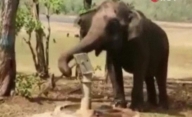 Hindistan'da doğal kaynak bulamayan fil, su içmek için farklı bir yol kullandı; gündem oldu