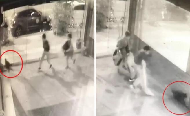 İki Çocuğun Bir Kediyi Bayıltana Kadar Dövdüğü Anlar Kamerada