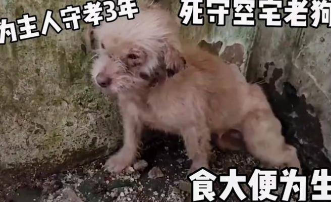 İnsan Dostu Öldükten Sonra Evde Tek Başına Yaşamaya Devam Eden Köpeğin, Kurtarılıp Yaşadığı İnanılmaz Değişim
