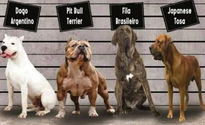 Irk köpek besleyenlere kısırlaştırma ve kayıt zorunluluğu