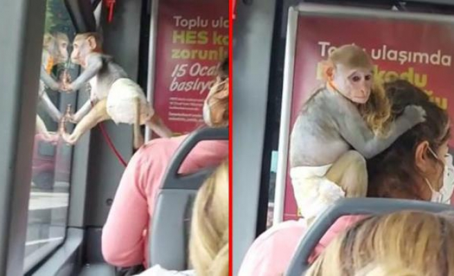 İstanbul'da Bir Vatandaş İETT Otobüsüne Maymunuyla Bindi