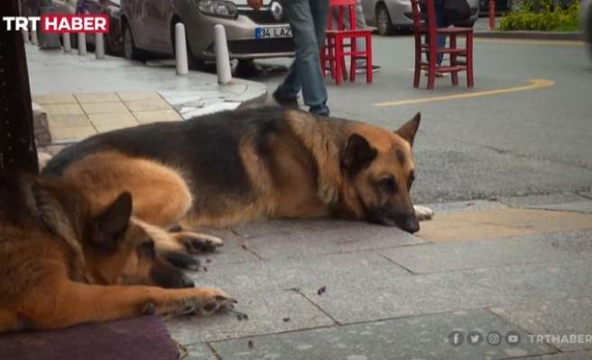İyi İnsanlar İyi ki Var: Hayatını Adadığı Yaşlı Köpeğe Yürüyemediği İçin Araba Yapan Mehmet Amca