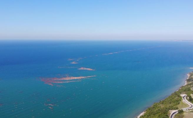 Karadeniz'de tomruk adacıkları oluştu