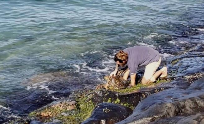 Kayaların Arasında Sıkışan Deniz Kaplumbağasını Kurtaran Güzel İnsan!