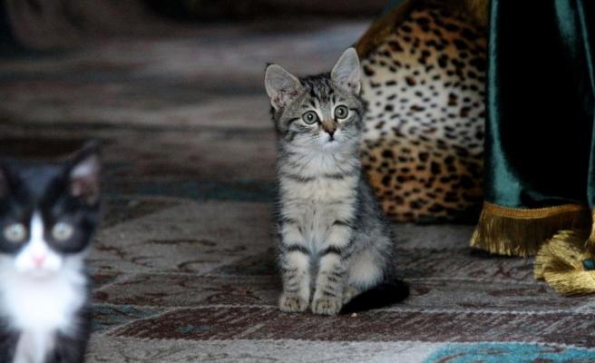 Kedi sevgisiyle bilinen