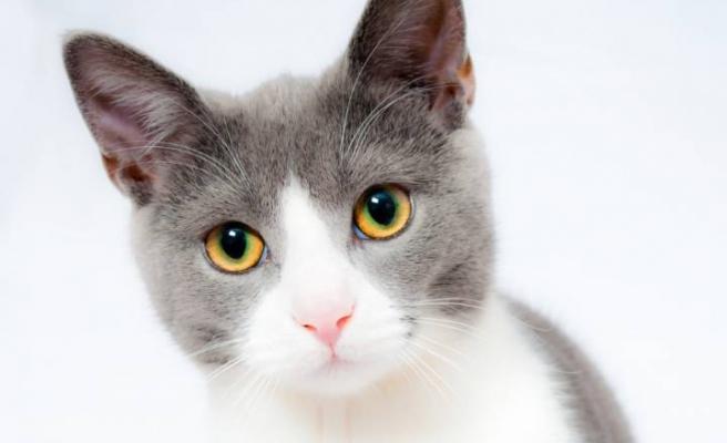 Kediler Neden Kusar?
