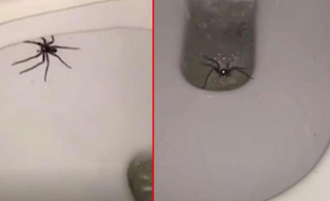 Klozete oturacağı sırada avcı örümceği gören kişi korkuyla sarsıldı! Sifonu çekmesi de işe yaramadı