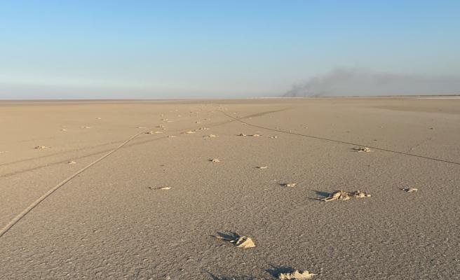 Konya Valiliğinden Tuz Gölü'ndeki flamingo ölümlerine inceleme
