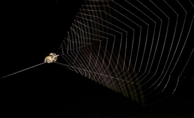 Küçük örümceğin büyük gizemi