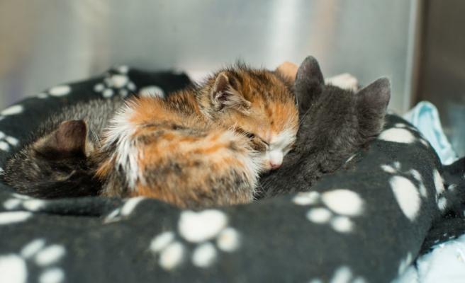 Kuşadası Belediyesi'nden Örnek Hareket: Petshoplarda Hayvan Satışı Yasaklandı