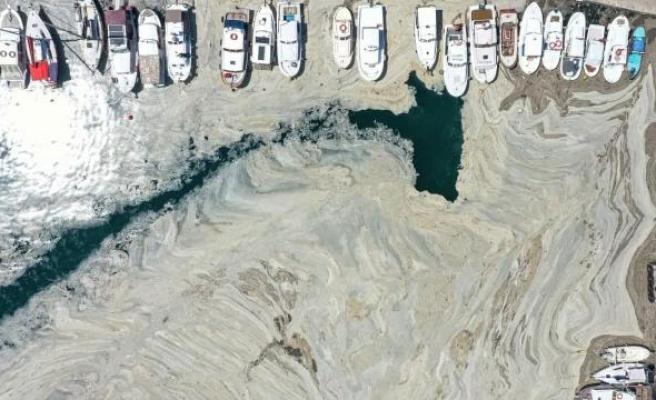 Marmara'da Ölüm Çoktan Başladı: DW Türkçe Muhabiri Dalış Yaparak Marmara'daki Salya Tehdidini Kaydetti