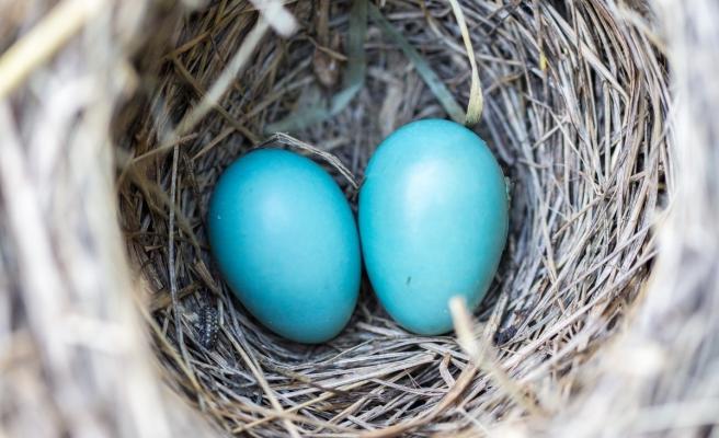 'Mavi yumurtanın içinden sağlık iksiri çıktı'