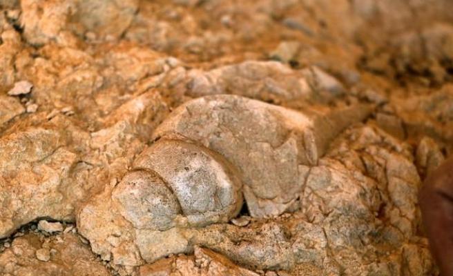 Milyonlarca Yıl Önce Elazığ Beachleri: Kayalık Alanda Deniz Canlılarının Fosilleri Bulundu