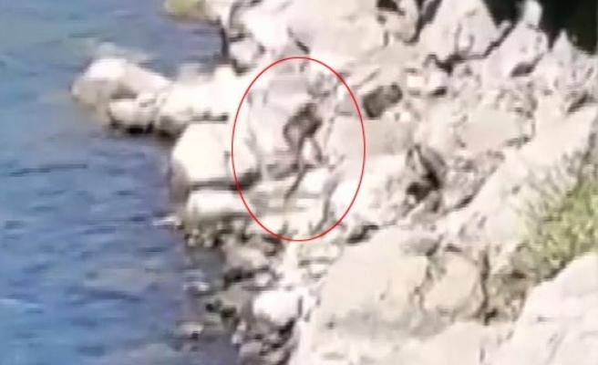 Nesli tükenme tehlikesi altındaki su samuru Fırat Nehri'nde görüntülendi