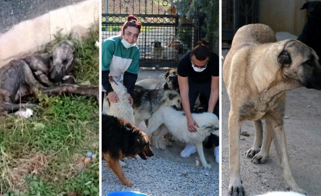 Ölmek Üzereyken Bulunan 'Simon', Bir Grup Hayvansever Sayesinde Yaşama Tutundu