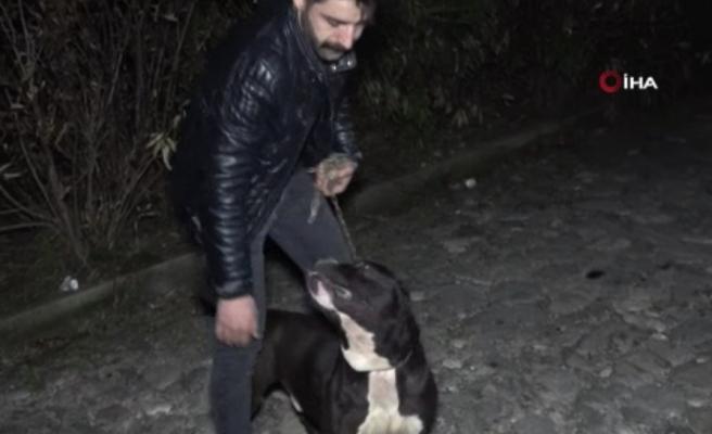 Ormanlık Alandan Tecavüz Girişimine Uğrayan Kadını Köpek Kurtardı
